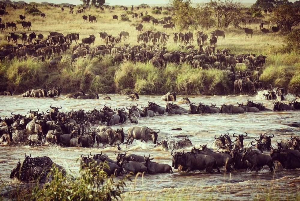 Day 2: Maasai Mara National Reserve
